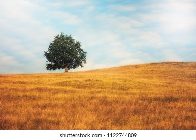 Lonely tree standing in the middle of empty field with cloudy sky background