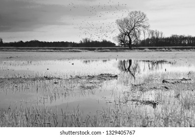 A lonely tree standing proud after a flood. Only a swarm of birds is keeping him company .