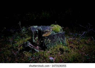 Lonely Tree stump with moss in forest at night