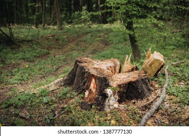 Lonely tree stump in the woods