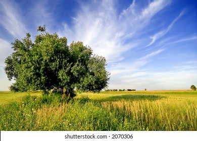 lonely tree in a summer field