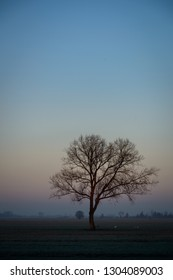 Lonely tree in a tipical Dutch winter landscape
