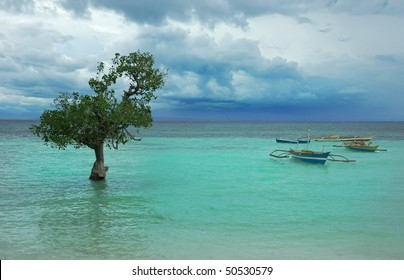 lonely tree in the turquoise water in Philippines