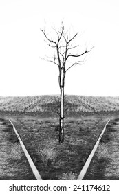 Lonely tree in vertical composition on black and white