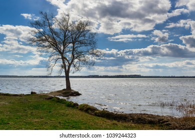 Lonely tree in the water during spring flood. Early spring landscape