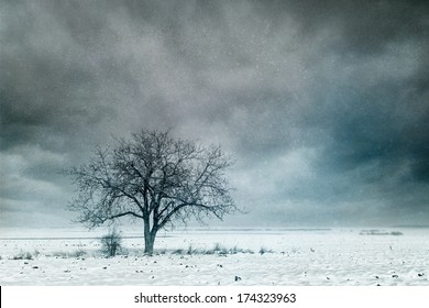 Lonely tree in the winter field. Vintage style photo.