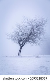 A lonely tree in a winter landscape, clouded slightly in mist