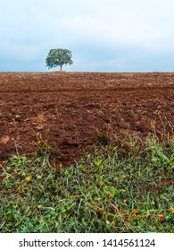 A lonely tree in winter in a plowed field with clumps of uncultivated land in the countryside and a plant in the foreground