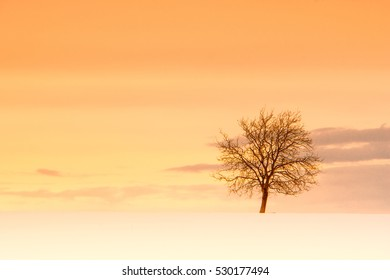 lonely tree in winter season with snow