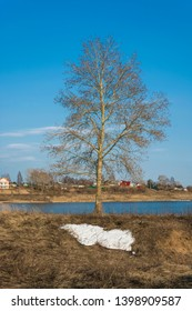 A lonely tree without leaves on the bank of a small river against the blue sky and the remains of white snow.