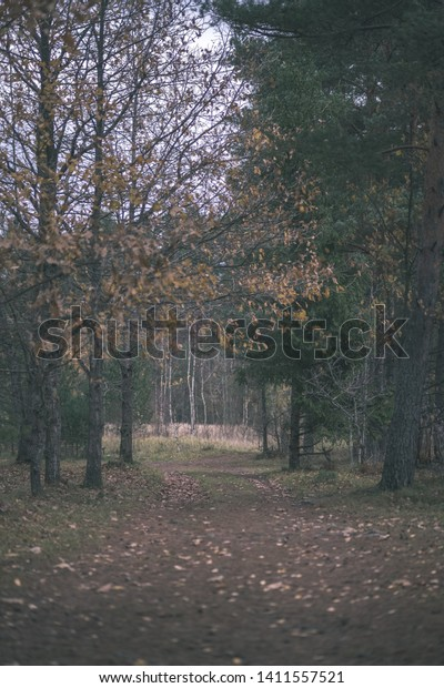 Lonely Trees Last Colored Leaves Branches Stock Image Download Now