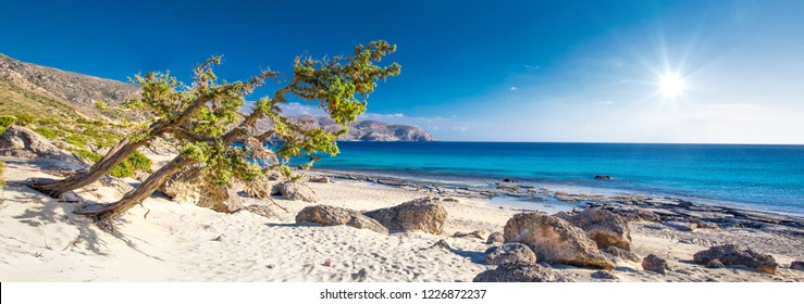 Lonely trees near Elafonissi beach on Crete island with azure clear water, Greece, Europe. Crete is the largest and most populous of the Greek islands.