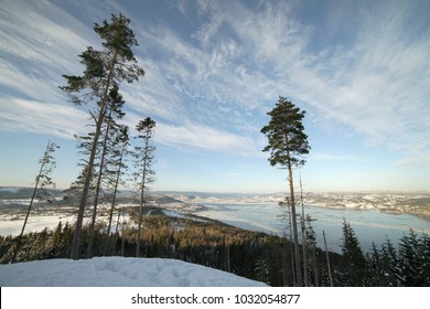 Lonely trees on background of Drammen fjord in winter time. Norway.