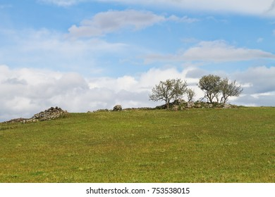 Lonely Trees on Green Grass Hill