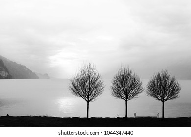 Lonely trees on the quiet lake side in winter, minimalistic landscape