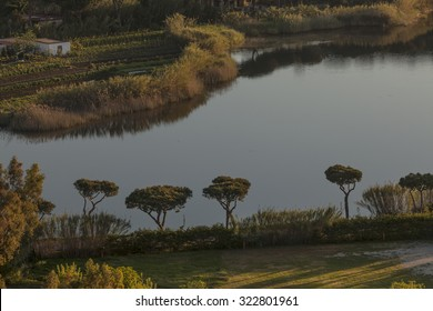 Lonely trees on shore of lake Lucrino, Italy