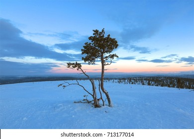 Lonely trees in snow at sunrise sunset. Concept symbol for solitude, strength, loneliness, new beginnings.