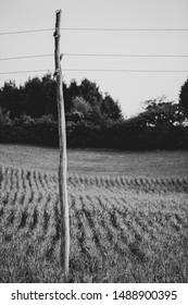 A lonely utility pole siting in a corn field, in rural part of Slovenia. I made a nice contrast between the nature and industry. At least its made of wood and somewhat fits into the landscape.