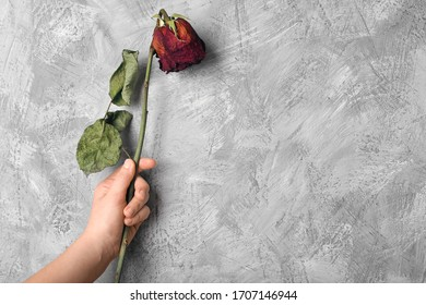 Lonely wilted red rose on a gray stone background. Dead flower on a textural background top view. Blank, postcard, template for design withered flowers on a light background.