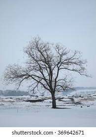 Lonely winter tree in a snowy field