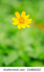 Lonely yellow flower on green leaf background