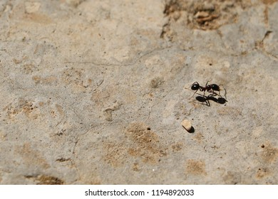 A loner ant going for a walk