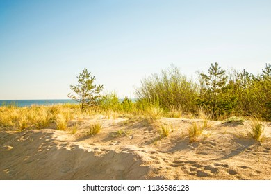 lonesome beach of the Baltic Sea with blue sky and dunes