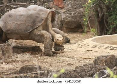 Lonesome George, Galapagos Islands