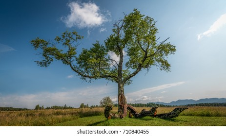 A lonesome old tree in a meadow at Lake Placid in the High Peaks region of the Adirondack Mountains, New York