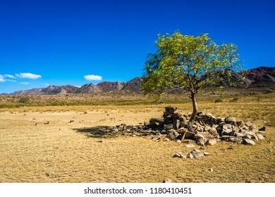 Lonesome tree in Toro Toro Bolivia. The Andes Range