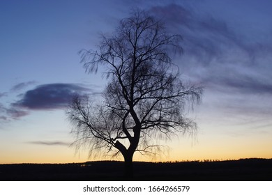 Lonesome tree at winter in sunset