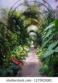 a long arched arbour with path in a park filled with tropical plants and flowers typical of parks in tenerife spain