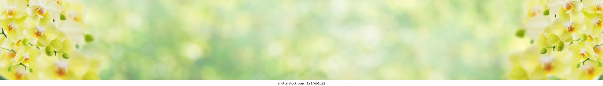Long banner with yellow orchid flowers on blurred abstract natural yellow-green background with beautiful bokeh