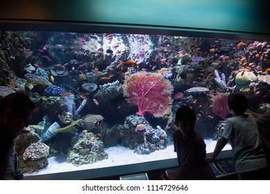 Long Beach, California, USA - June 10, 2018: Kids watching the aquarium full of sea creatures at the The Aquarium of the Pacific in Long Beach, CA