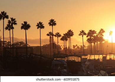 Long Beach golden sunset against the backdrop of palm trees and yachts