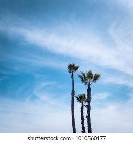 Long Beach palm trees with beautiful blue sky and clouds