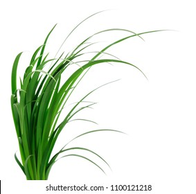 Long blades of green grass against a white background.