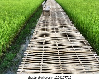 A long bridge on the green rice fields made from weaved bamboo, being walking way for people
