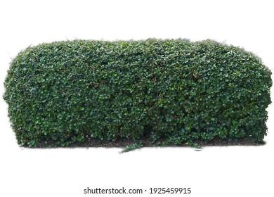Long bush horizontal isolated on white background