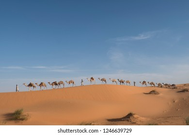 Long camel Caravan isolated on summit od dune in sahara