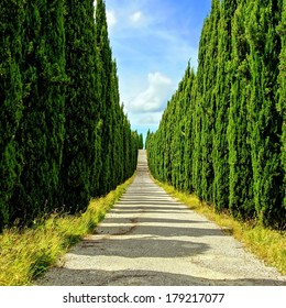 Long cypress lined street in Tuscany, Italy