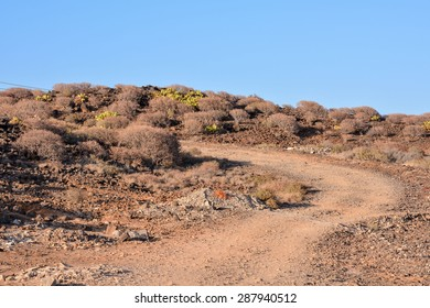 Long Dirt Desert Road disappears into the Horizon.