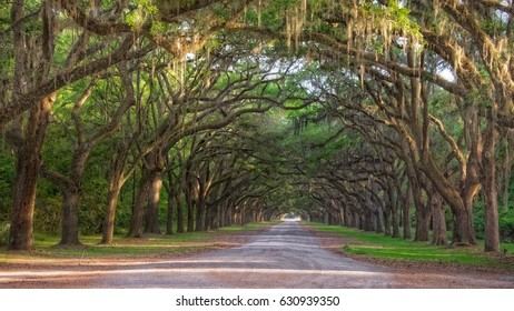Long dirt road lined with Live oak trees and hanging Spanish Moss in late afternoon sun