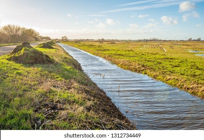 Long ditch in a Dutch polder landscape. The ditch has been cleaned recently and the waste has been piled up on the bank. It is a sunny and windy day in the winter season.