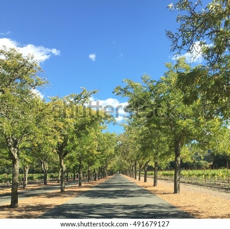 long driveway shaded by trees stock photo edit now 491679127