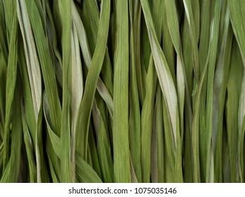 289 Best Dry Grass Texture - Duper