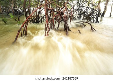 Long exposed wave reaching shore in mangrove forests