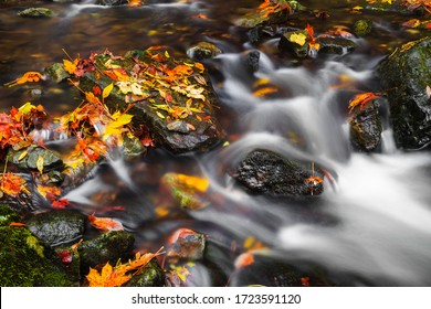 Long exposure of colorful yellow and orange autumn leaves in a flowing stream cascading over small rocks in a close up view conceptual of the fall season
