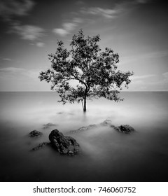 Long exposure image of seascape with tree on the water at Port Dickson Malaysia. Soft focus due to long exposure