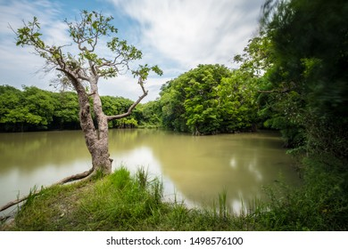 A long exposure of a lake in a rural wetland swamp area with vegetation, clouds and the surface of the lake moving in the wind.